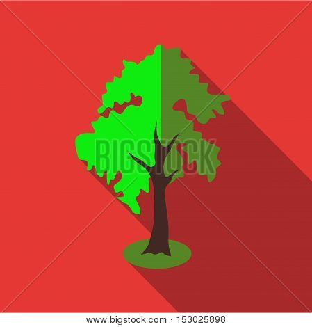 Fluffy tall tree icon. Flat illustration of fluffy tall tree vector icon for web