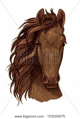 Arabian brown stallion vector portrait. Horse head color sketch. Mustang with serious look and wavy mane
