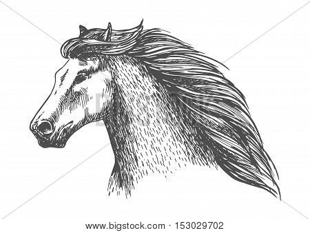 Raging gray horse free running. Vector sketch portrait of beautiful mare on sport races with noble look and thick wavy mane