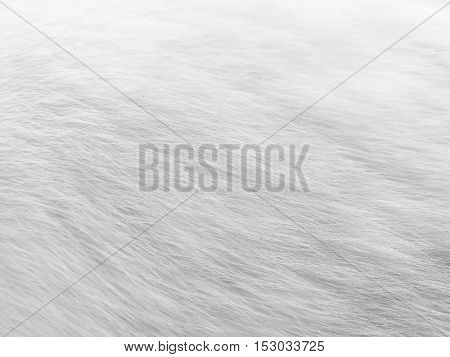 dirty white cat's hair in black and white style - grayscale - monochrome
