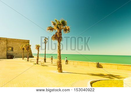 Palm trees along the coast in Cadiz at beautiful sunny day. Image of tropical vacation and sunny happiness. Filtered vintage photo.
