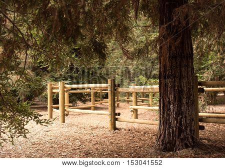 A Hiking Trail in a Park with Redwood Trees