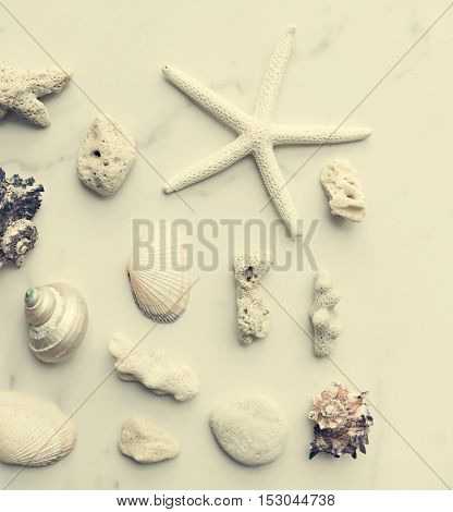 Starfish Seashell Summer Holiday Vacation Beach Concept