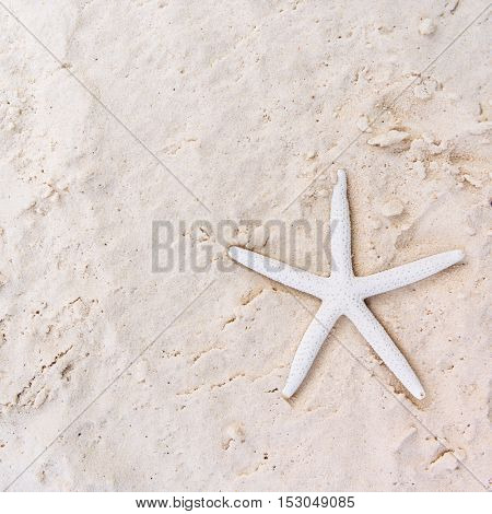 Starfish Sand Summer Holiday Vacation Beach Concept