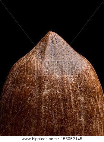 Macro view on pecan nut isolated on black background