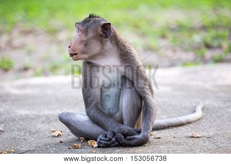 Monkey sitting on the road in the park.