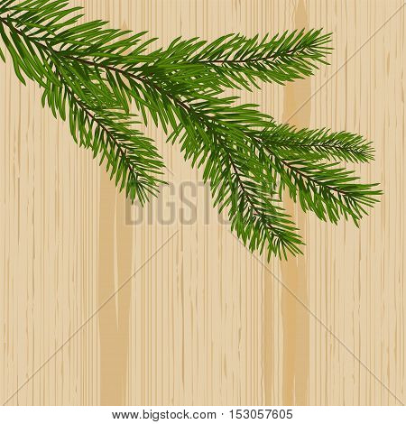 Green spruce branches on the background nature of wood. vector illustration