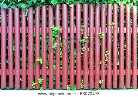 Rustic wooden fence painted red with greenery sprouting through the board. Background texture.