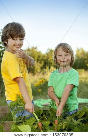 boys with a carrot and in the garden, children harvest vegetables with high beds