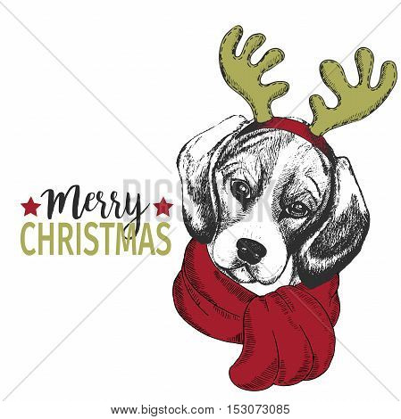 Vector portrait of Christmas dog. Beagle dog wearing deer horn rim and scarf. Use for Christmas poster flyer greeting card holiday celebration party pet shop shelter pharmacy decoration.