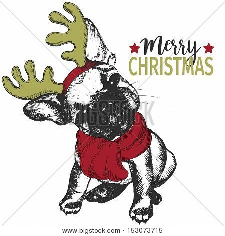 Vector portrait of Christmas dog. French bulldog dog wearing deer horn rim and scarf. Christmas poster flyer greeting card holiday celebration party pet shop shelter pharmacy decoration.