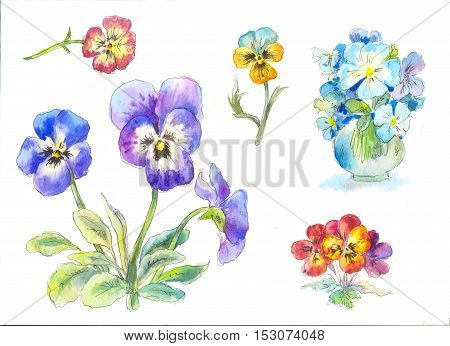 pansy watercolor painting illustration with garden flowers