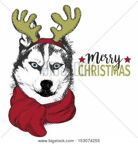 Vector portrait of Christmas dog. Siberian husky dog wearing deer horn rim and scarf. Christmas poster flyer greeting card holiday celebration party pet shop shelter pharmacy decoration.