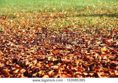 Natural autumnal background with fallen leaves and green grass