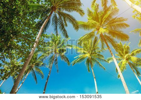 Tropical landscape with palm trees. Bottom view
