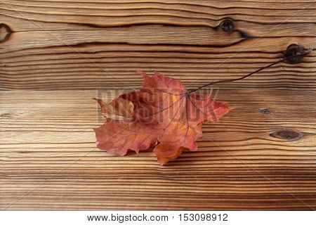 Dry autumn maple leaf on wooden background. Herbarium. Artistic original backdrop place for text