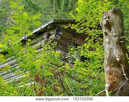 Wooden single hut house in the green forest mountains