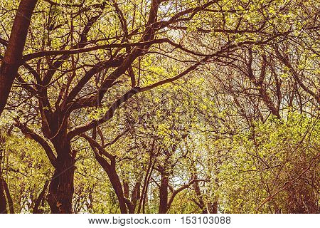 Branches And Foliage Of Trees Against The Sky