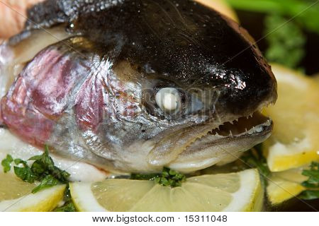 Head Of Fresh Salmon