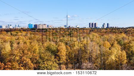 Yellow Autumn Woods And City With Tv Tower