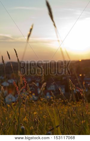 Idyllic landscape in the Alps with fresh green meadows and blooming flowers in Germany
