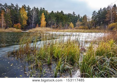 Autumn Landscape With Pines And Birches. Siberia, River Ob