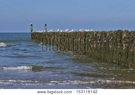 Rows Of Poles Of Breakwater