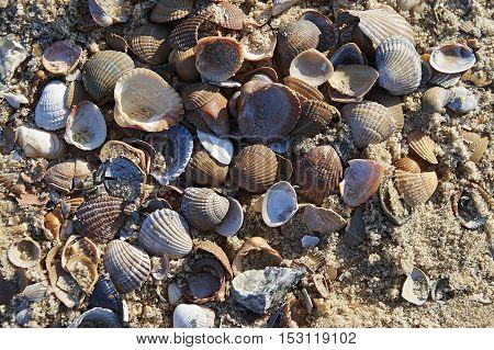 Assortment Of Seashells On The Beach
