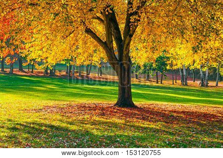 Vibrant Fall foiliage in this park in Long Valley New Jersey.