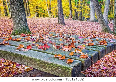 Autumn leaves settled on an old picnic table in this woodlands in Long Valley NJ.