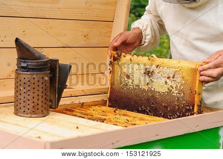 The beekeeper takes out from the hive honeycomb filled with fresh honey.
