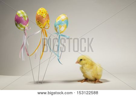 Small chicken standing next to Easter decorations on the white background