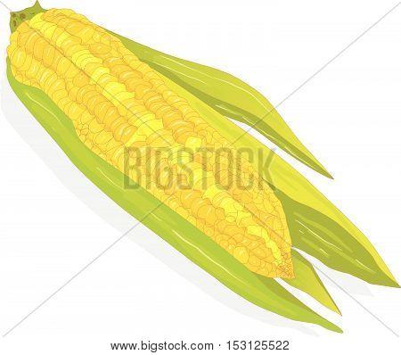 Corn4 Copy