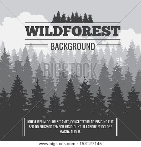 Wild coniferous pine forest vector outdoor nature background. Banner with pine landscape illustration