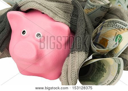 pink pig in a warm scarf made of money
