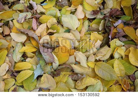 Texture Of Autumn Leaves