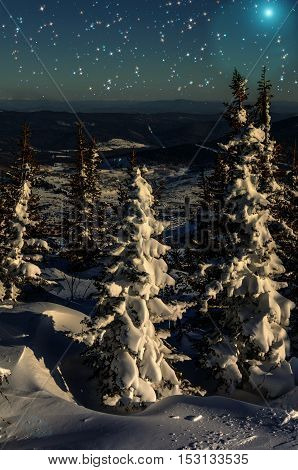Night scene in the 3D illustration with snow-covered christmas trees in winter forest on the of the mountain on the background of stars and sky (vertical orientation)