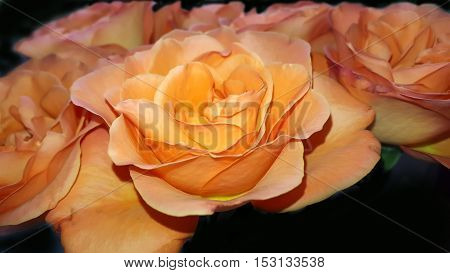 Bouquet Beautiful orange roses on black background