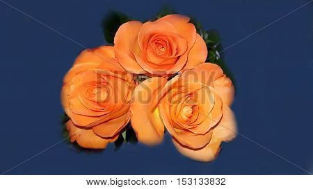 Bouquet Beautiful orange roses on black blue background
