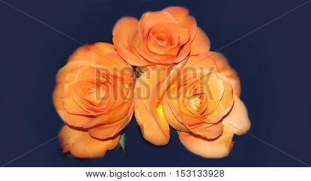 Bouquet Beautiful orange roses on black green background