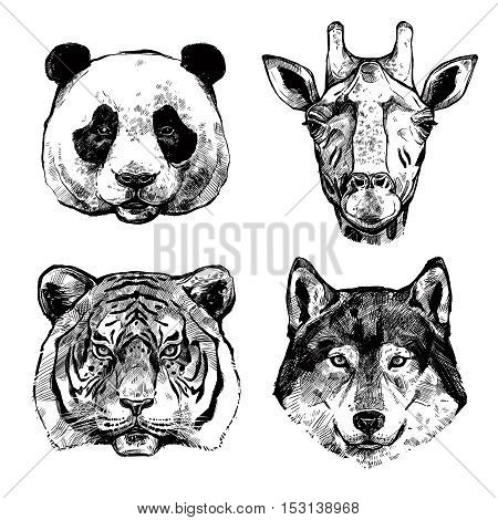 Black and white hand drawn animals portraits of panda giraffe tiger and wolf isolated vector illustration