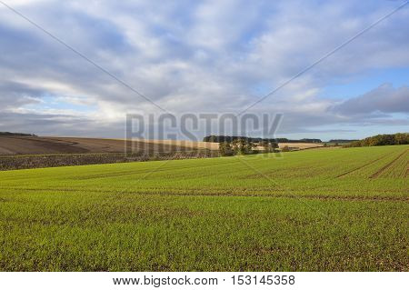 Autumn Agriculture With Big Sky