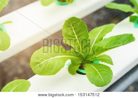 Organic hydroponic vegetable cultivation farm water system