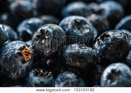 Blueberries closeup with water drops. Horizontal background.
