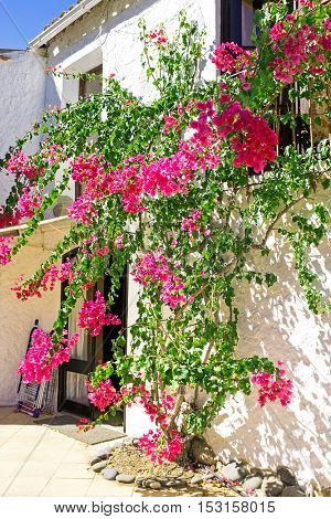 Old building with bougainvilla flowers in Portugal
