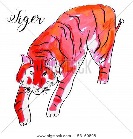 Watercolor vector hand drawn tiger with text