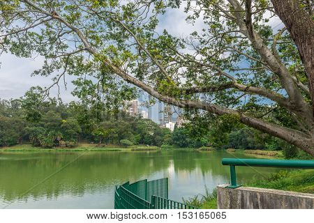 View Of The Aclimacao Park Nature In Sao Paulo