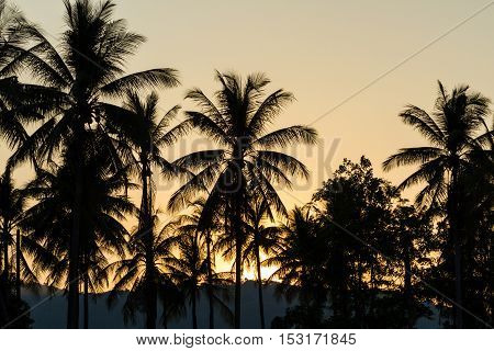 Palm trees silhouettes on tropical sunset background