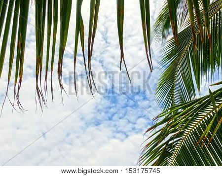 Tropical Background with palms and blue sky.