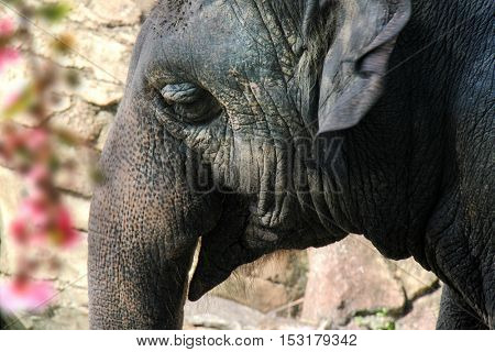 an image of an elephant